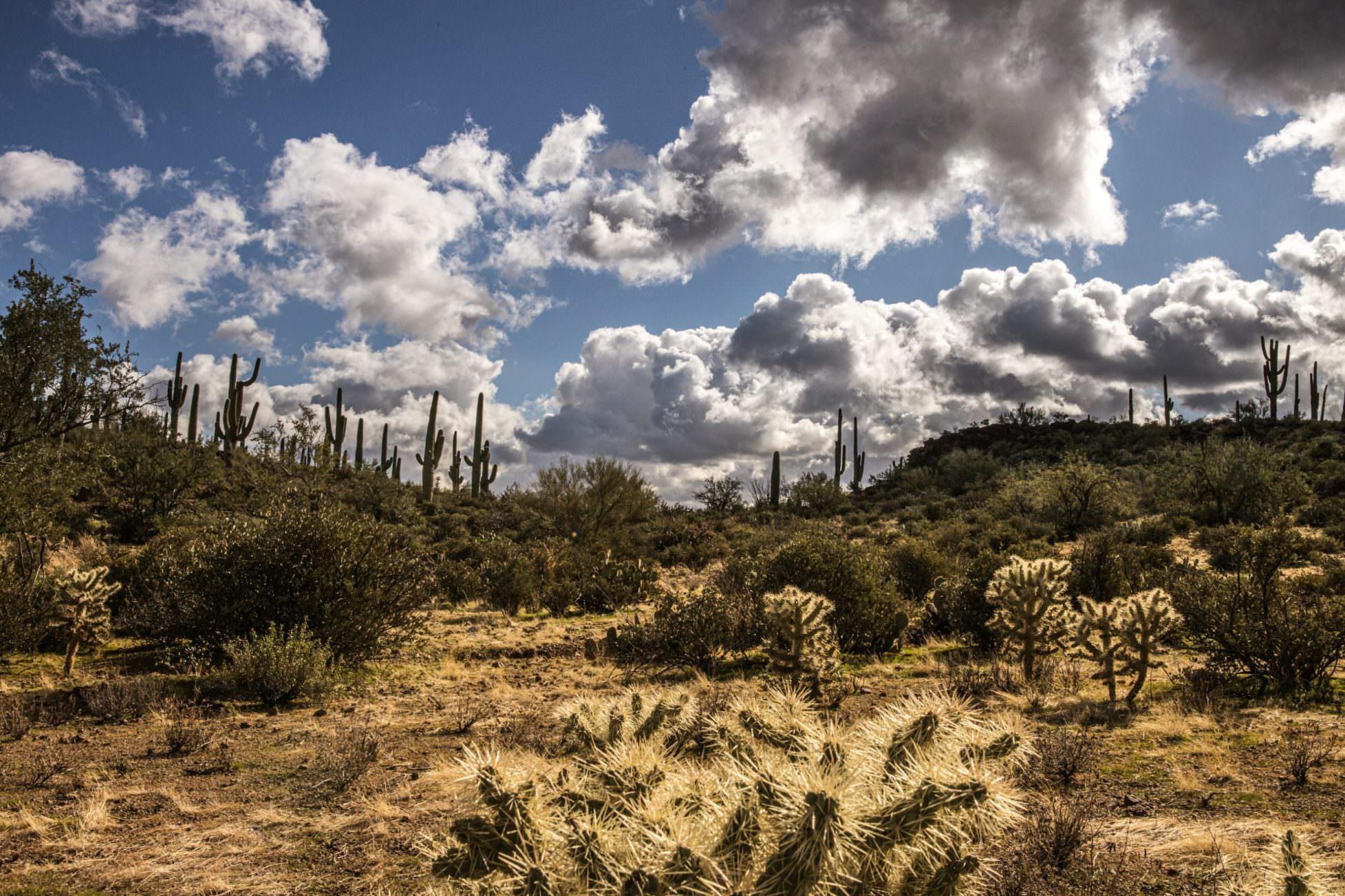 Tucson Arizona Print